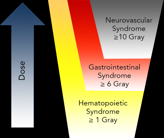 Acute Radiation Syndrome Phases